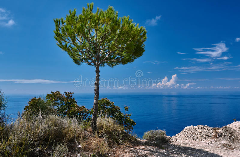 Pino de piedra solo en las orillas del mar jónico fotos de archivo libres de regalías