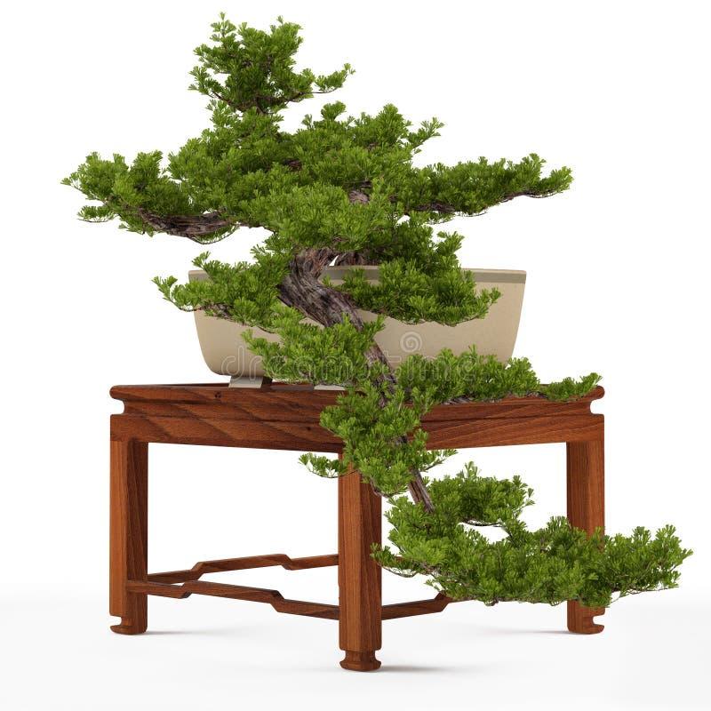 Pino dei bonsai in un vaso fotografie stock