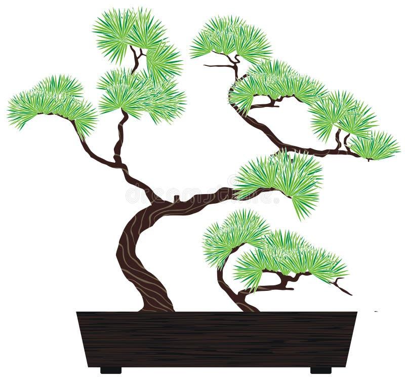 Pino del árbol de los bonsais stock de ilustración