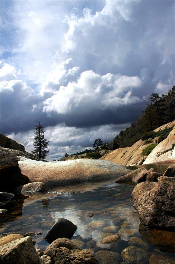 Pino solitario, piscina reservada imagen de archivo