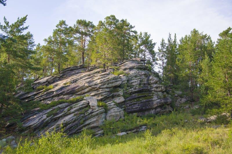 Pino sulle rocce fotografia stock