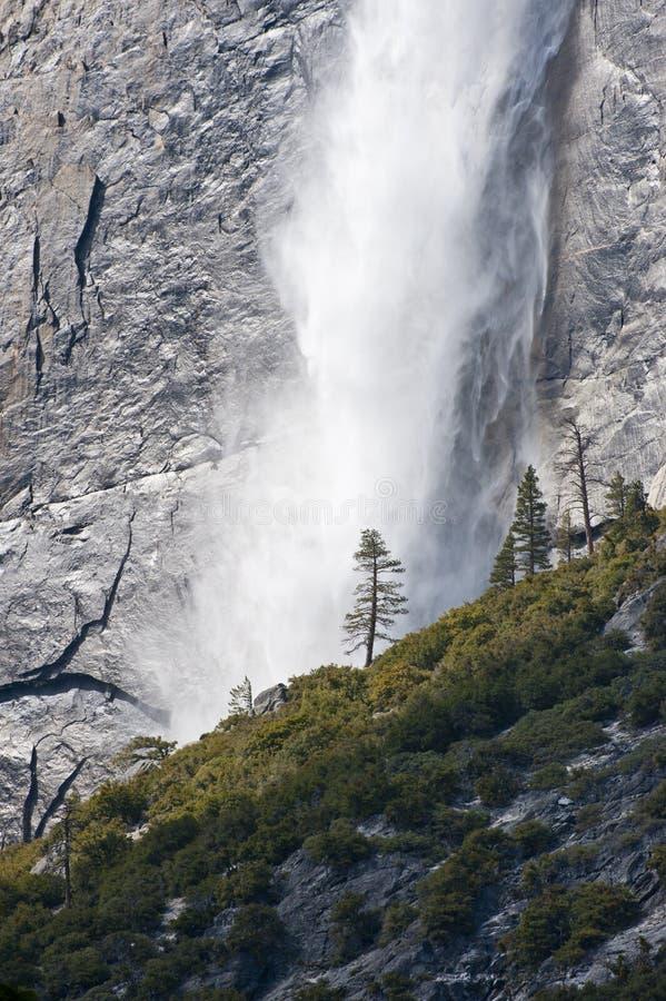 Pino y cascada solitarios foto de archivo