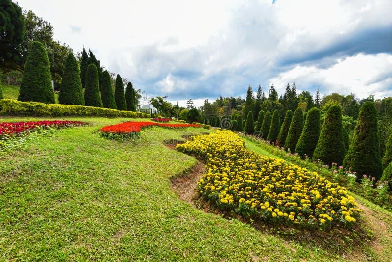 Pino y flores del jardín fotografía de archivo libre de regalías