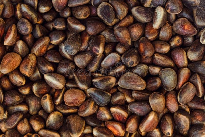 Pinoli non sbucciati Mucchio dei semi di pino del cedro fotografie stock libere da diritti