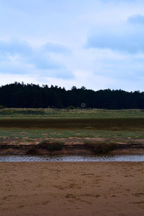 Pinos cerca de la playa en un clima tempestuoso, mar septentrional, playa de Holkham, Reino Unido fotos de archivo libres de regalías