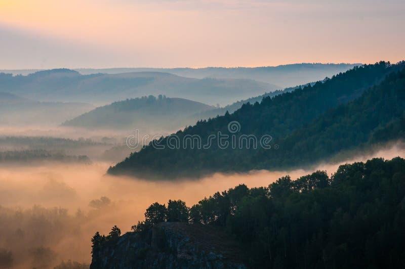 Pinos cubiertos en nieblas en los rayos del amanecer imagen de archivo