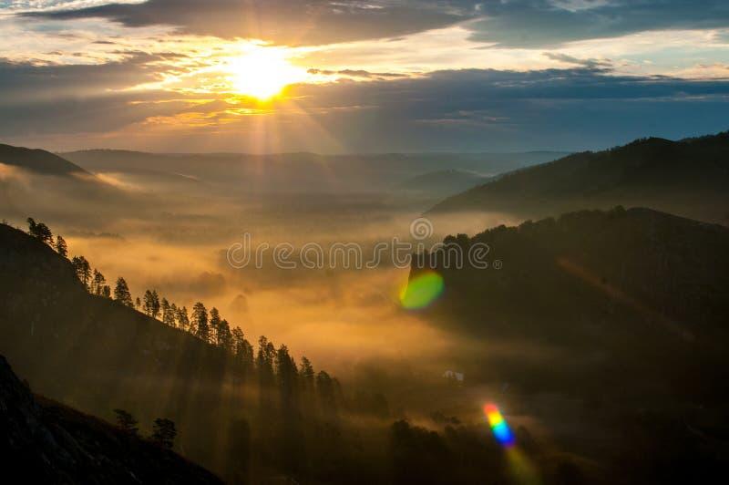 Pinos cubiertos en nieblas en los rayos del amanecer fotos de archivo