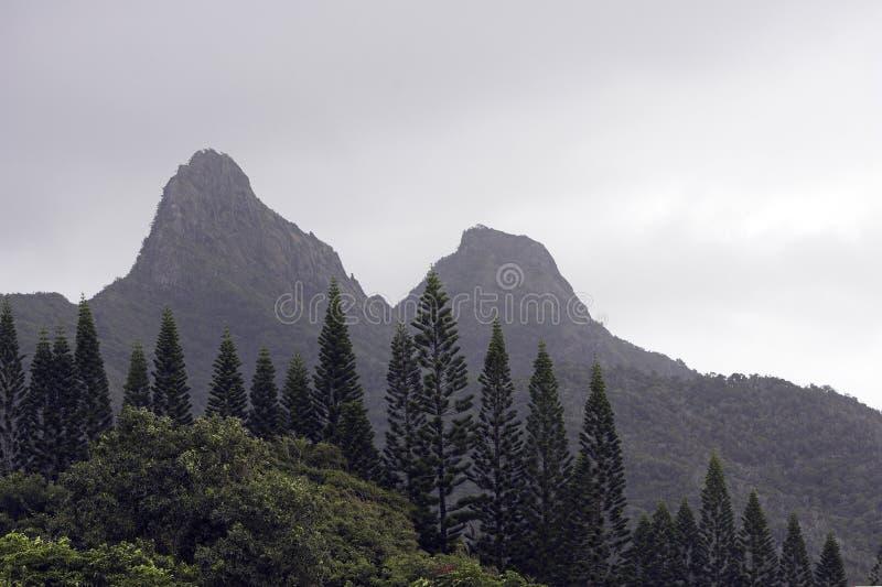 Pinos de Norfork en la niebla fotos de archivo