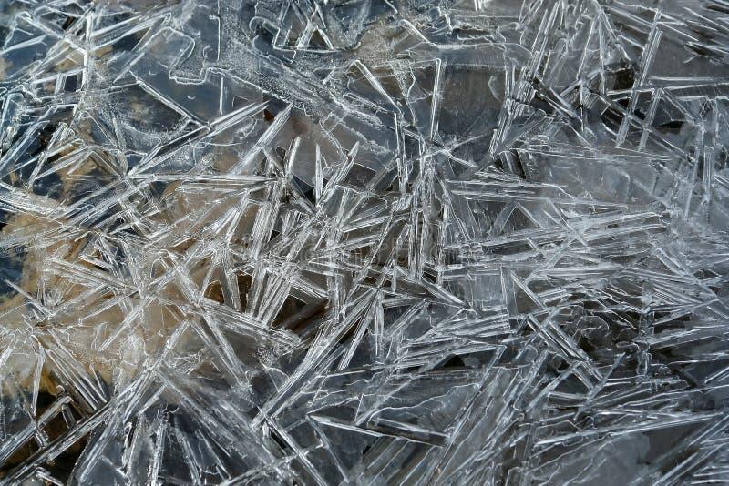Pinos do gelo fotos de stock