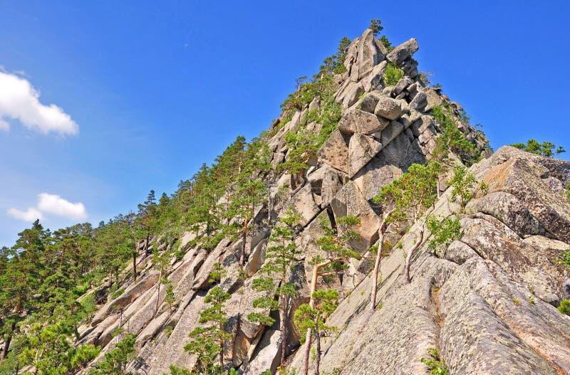 Pinos en la roca. kazakhstan. kokshetau librado fotografía de archivo