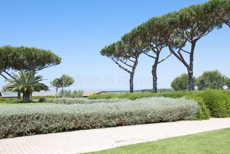 Pinos en Toscana imagenes de archivo
