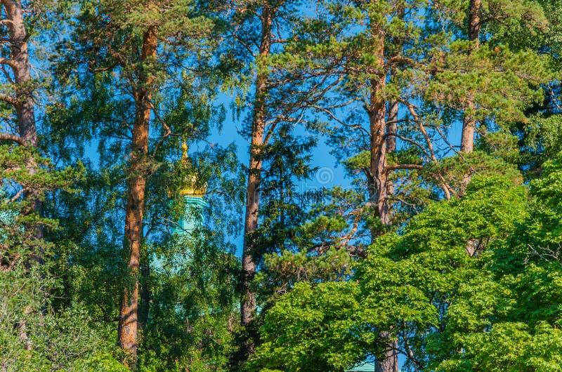 Pinos hermosos de Valaam, ocultando las capillas de ojos que alzapriman Según leyenda, Valaam es inasequible a los nos creyente fotografía de archivo libre de regalías
