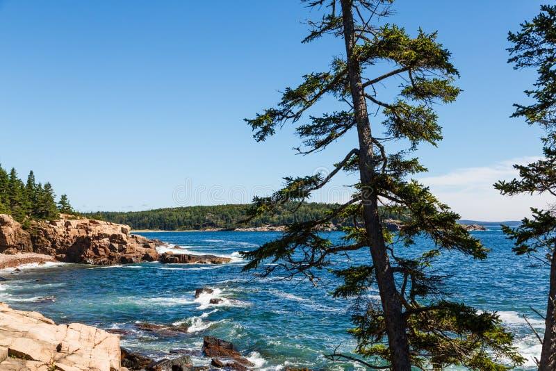Pinos a lo largo de Rocky Coast por el mar azul imagen de archivo