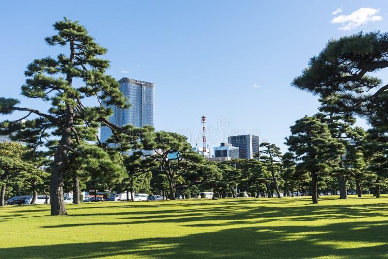 Pinos negros japoneses y edificios modernos Tokio foto de archivo