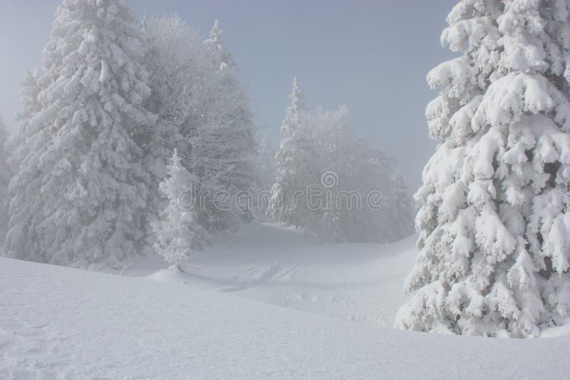 Pinos Nevado fotos de archivo