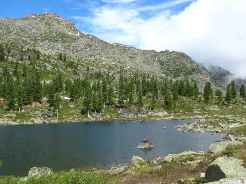Pinos verdes en una colina rocosa cerca del lago fotografía de archivo libre de regalías