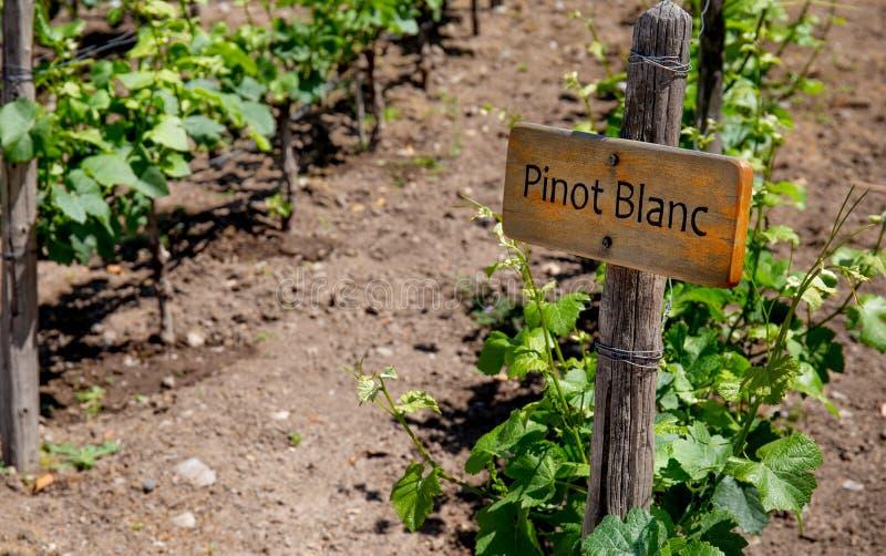 PINOT BLANC Wine sign on vineyard. Vineyard landcape stock image