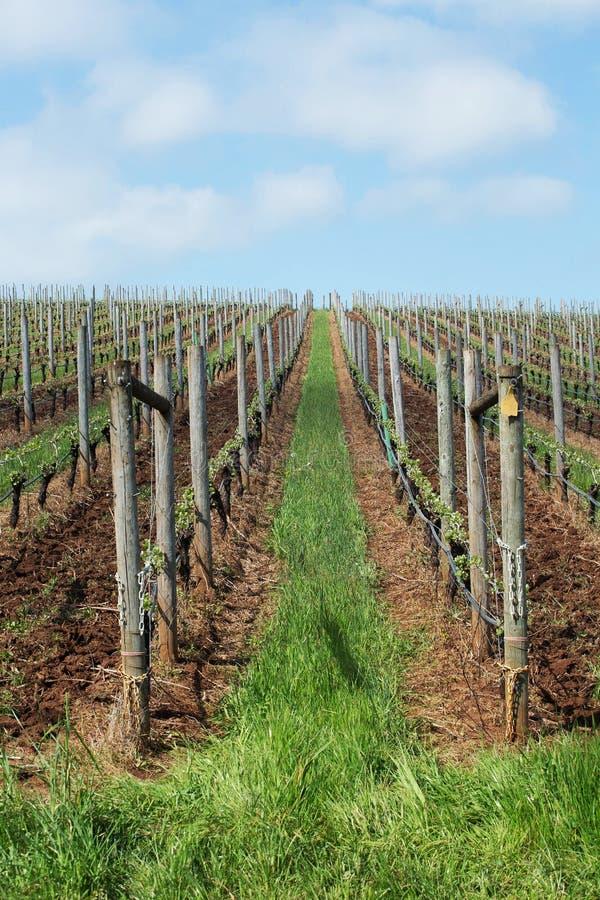 Pinot Noir Vineyards, Oregon. Photo of Pinot Vineyards in Oregon's Willamette Valley royalty free stock photos