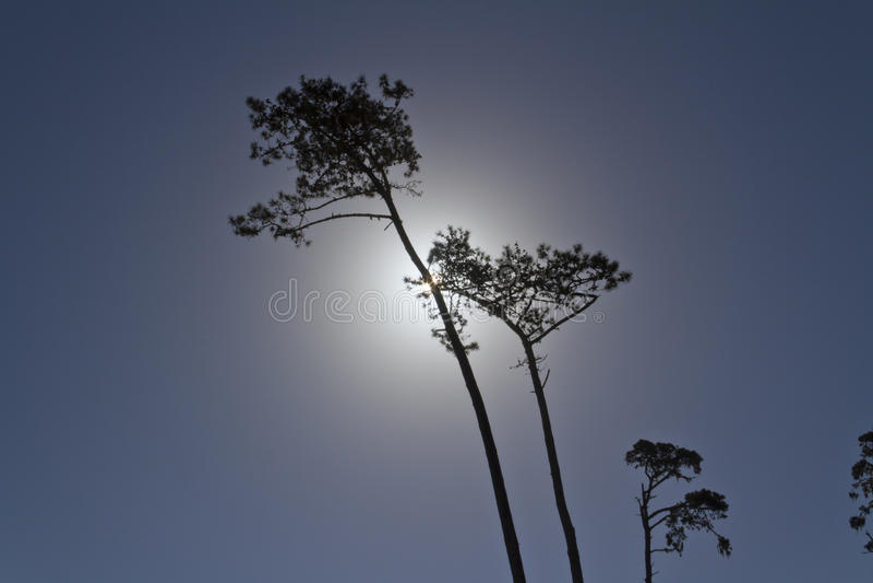 Pins, éclairage arrière Jour pour la nuit photos libres de droits