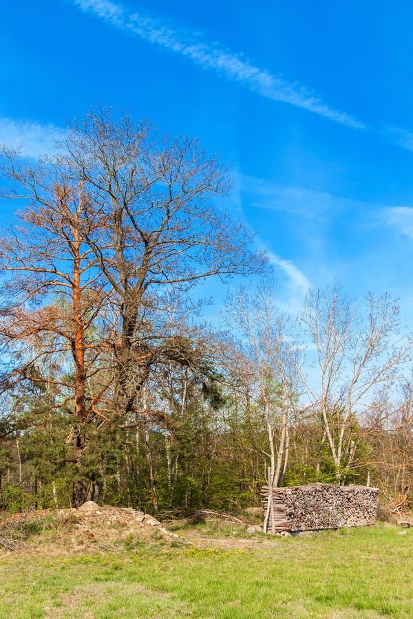 Pins au bord d'une for?t pr?s d'un champ dans la R?publique Tch?que Journ?e de printemps dans le paysage rural de for?t firewood photographie stock libre de droits