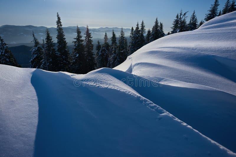 Pins couverts de neige dans le clair de lune photographie stock libre de droits