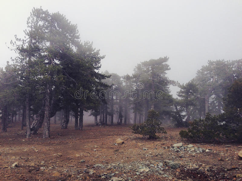 Pins de montagne brumeuse en Chypre image stock