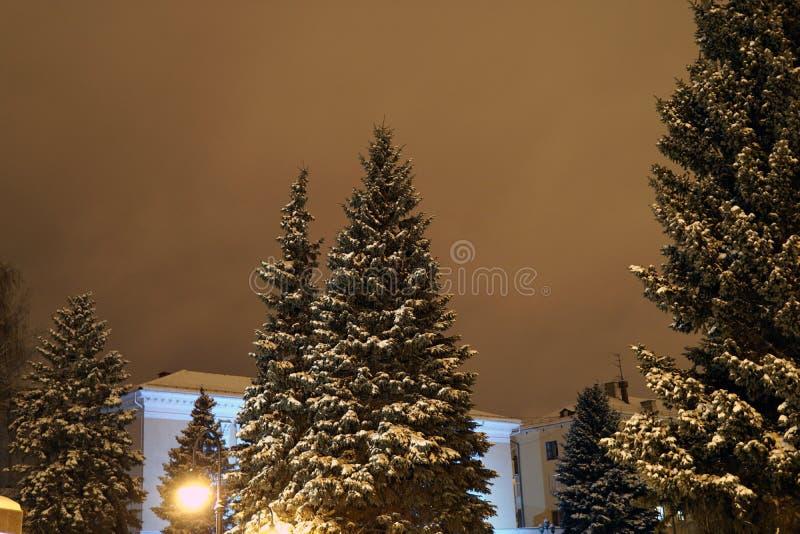 Pins de Noël en hiver dans la ville de nuit photographie stock