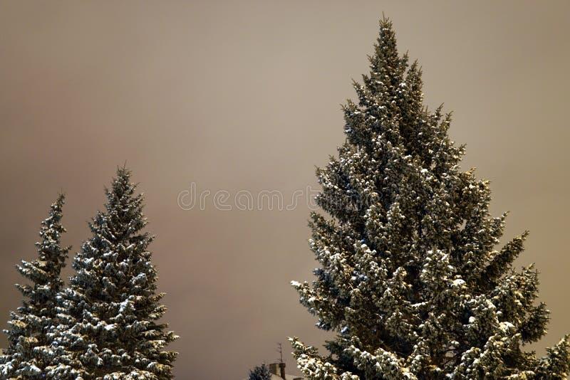 Pins de Noël en hiver dans la ville de nuit image stock