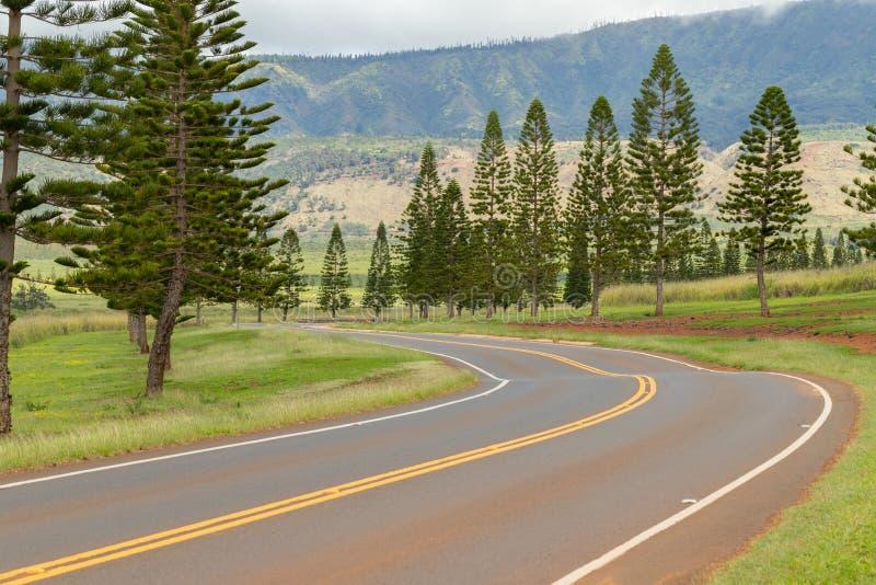 Pins hawaïens rayant la route venteuse à la montagne photos libres de droits