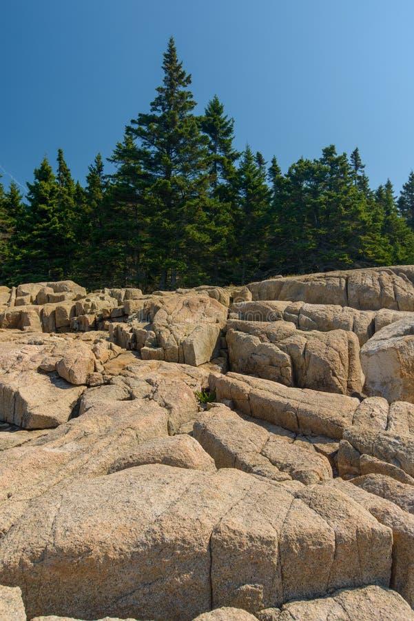 Pins s'élevant sur et dans les dalles roses de granit des roches l image stock