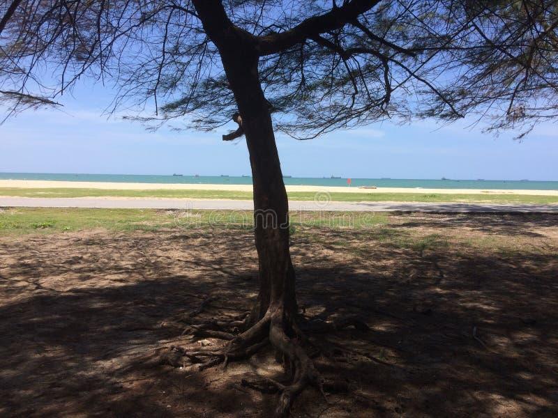 Pins sur la plage de sable image libre de droits