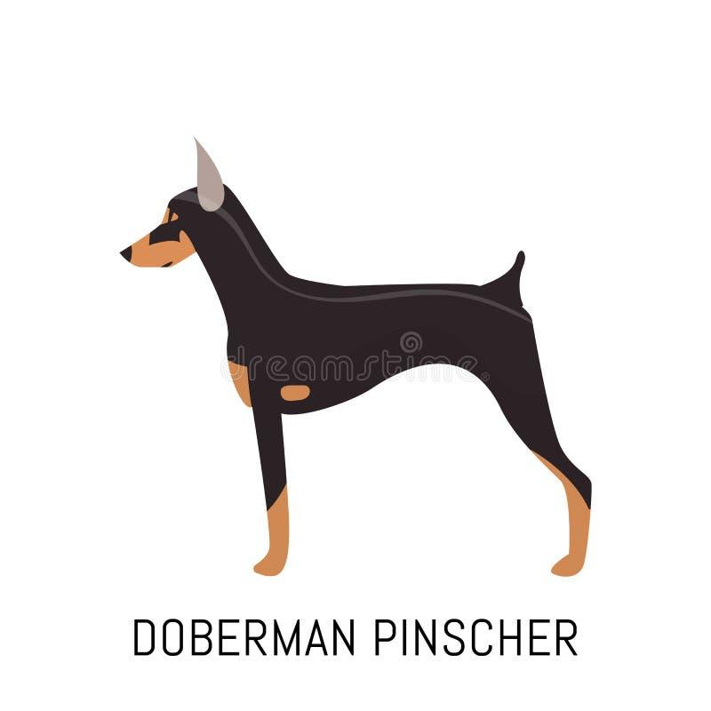 Pinscher del doberman Cane, icona piana Isolato su priorità bassa bianca immagine stock libera da diritti