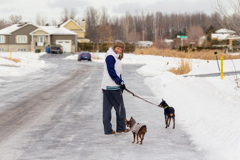 Pinscher dog walking outside in winter time royalty free stock photos