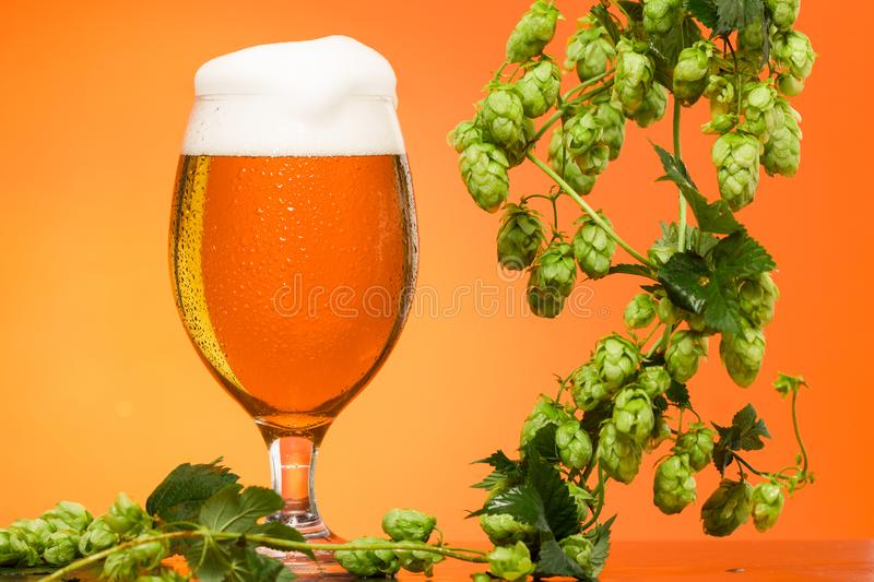 Pint of beer with ingredients for homemade beer on orange royalty free stock photography