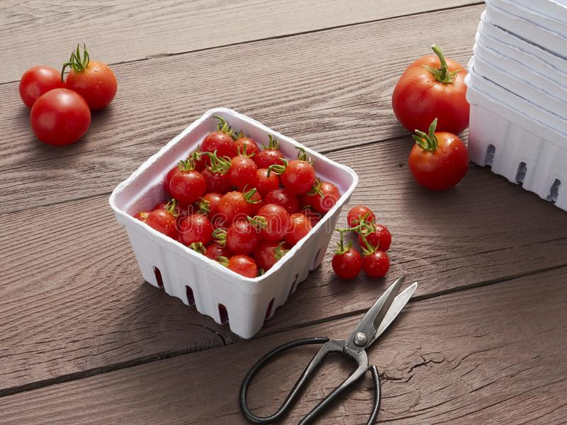 A pint of farmers market ready cherry tomatoes royalty free stock photography
