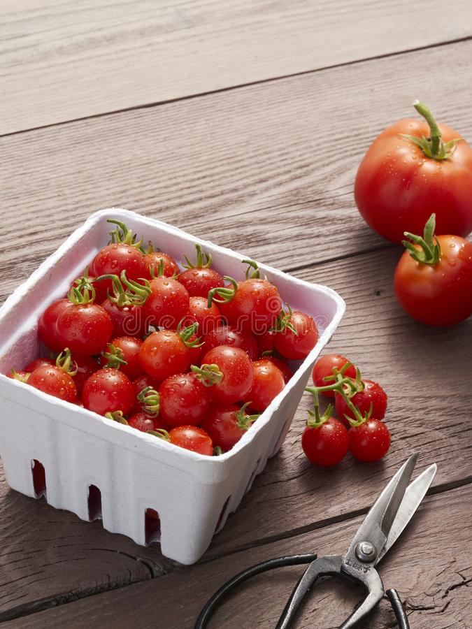 A pint of farmers market ready cherry tomatoes royalty free stock images