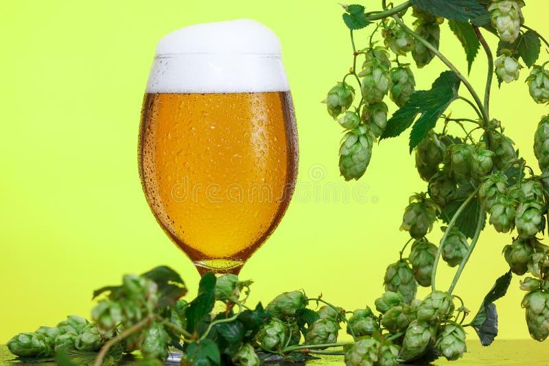 Pinta di birra con gli ingredienti per birra casalinga su giallo immagine stock