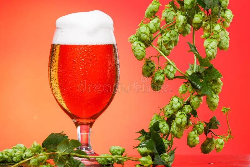 Pinta di birra con gli ingredienti per birra casalinga su rosso fotografie stock libere da diritti