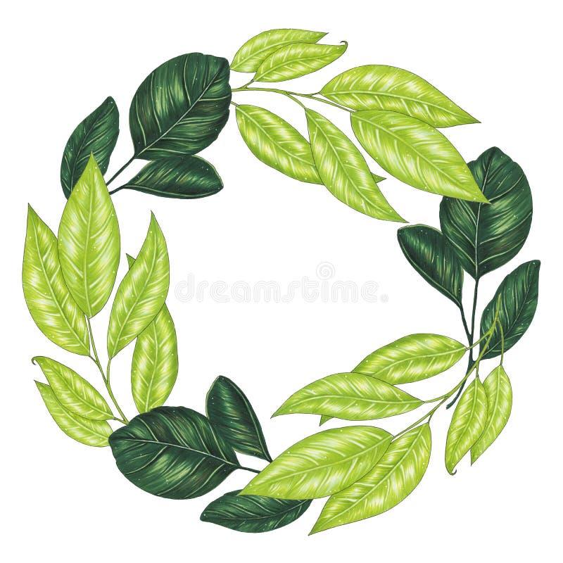 Pintado à mão com a grinalda floral dos marcadores com galho, ramo e as folhas abstratas verdes ilustração do vetor