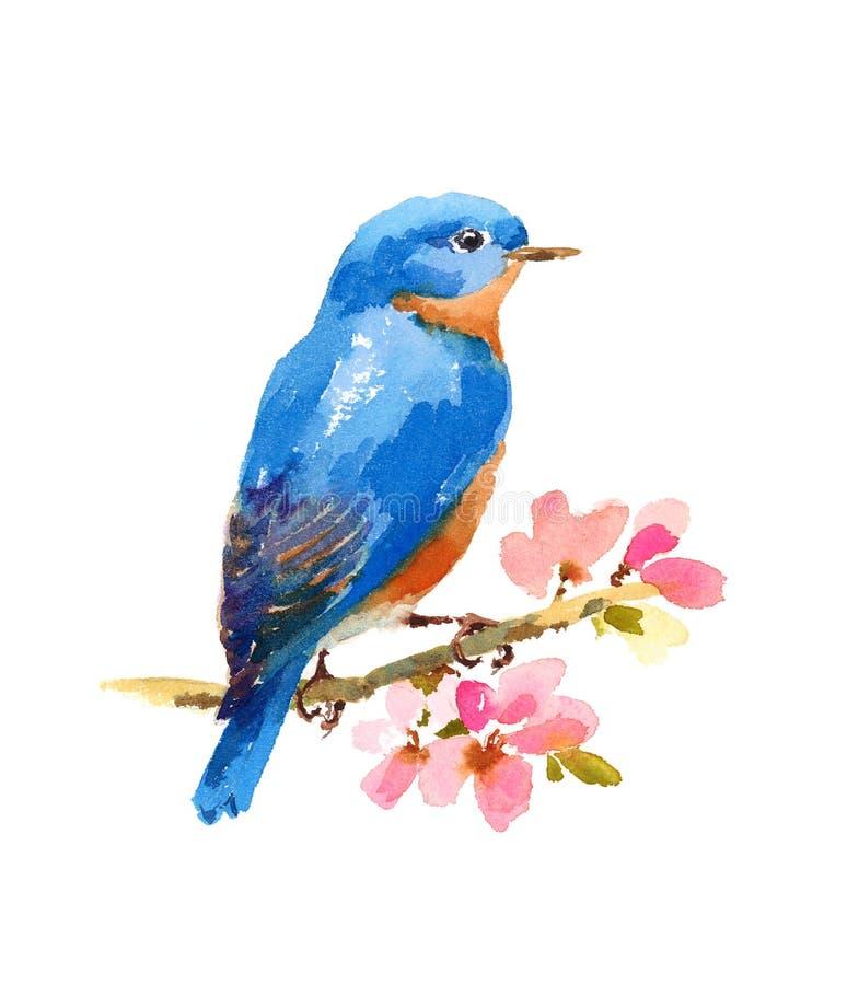Pintado à mão da ilustração da aquarela do pássaro do azulão-americano isolado no fundo branco ilustração do vetor