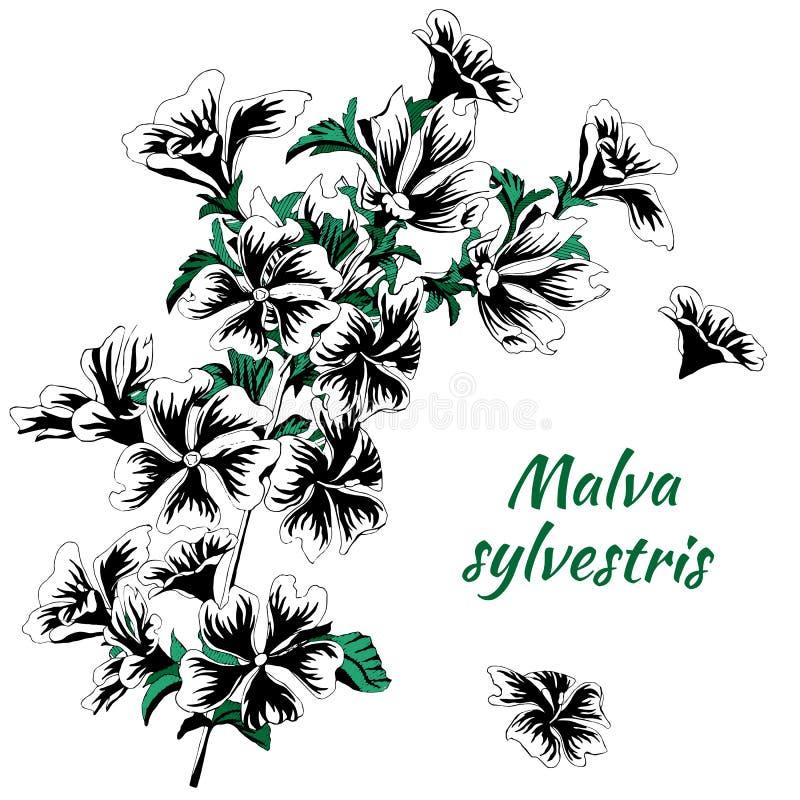 Pintado em flores da tinta Sylvestris do Malva Ilustra??o preto e branco do vetor em um fundo branco Esbo?o da tatuagem ilustração royalty free