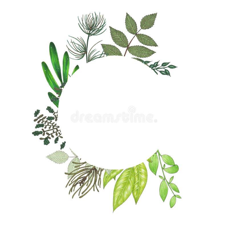 Pintado a mano con el marco floral de los marcadores con la ramita, la rama y las hojas abstractas verdes stock de ilustración