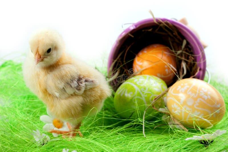 Pintainho e ovos novos fotos de stock