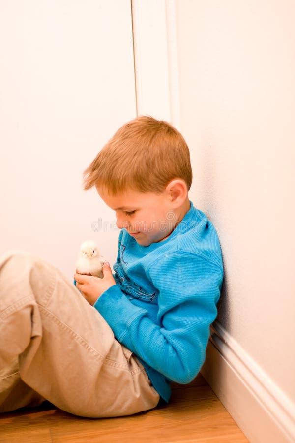 Pintainho feliz do menino e do animal de estimação imagens de stock