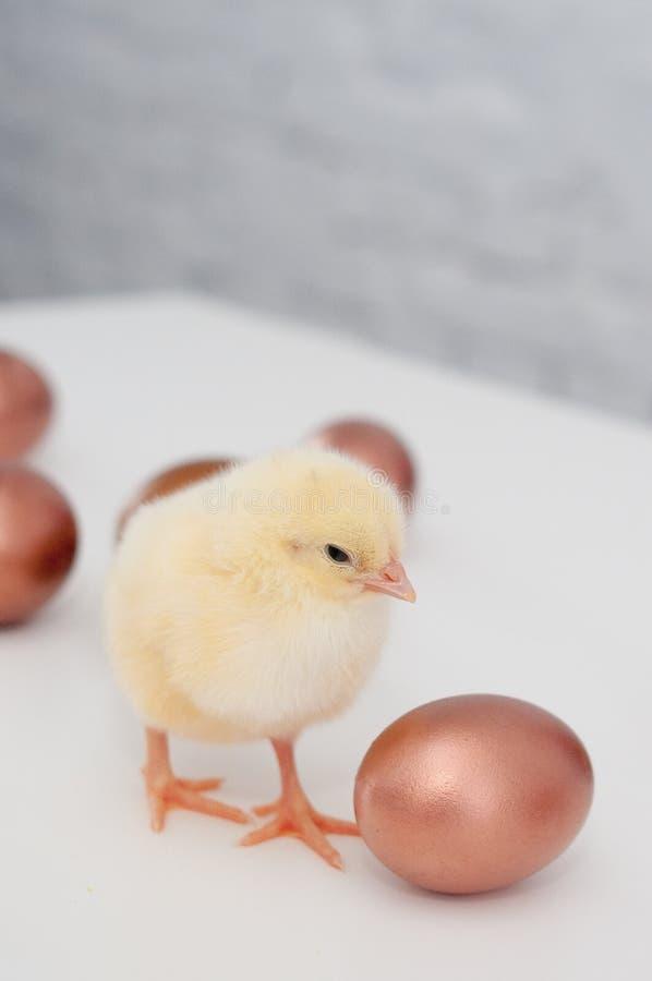 Pintainhos & ovos imagens de stock royalty free