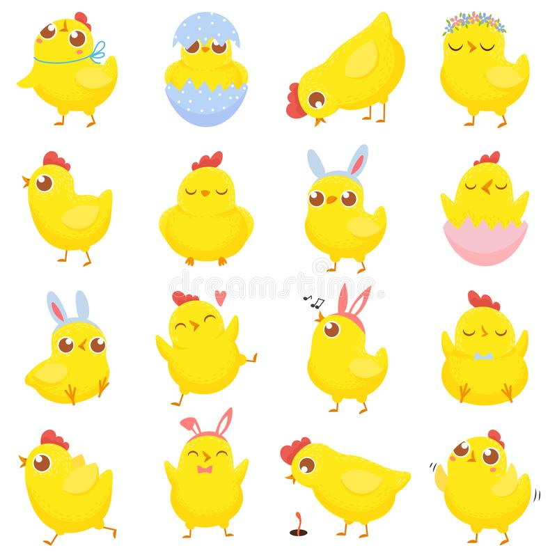 Pintainhos de Easter na grama isolada no branco Galinha do bebê da mola, pintainho amarelo bonito e galinhas engraçadas grupo iso ilustração royalty free