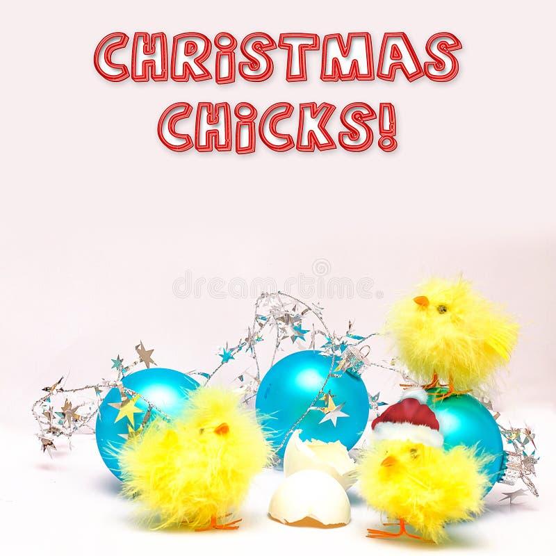 Pintainhos do Natal - três pintainhos do bebê - decorações foto de stock