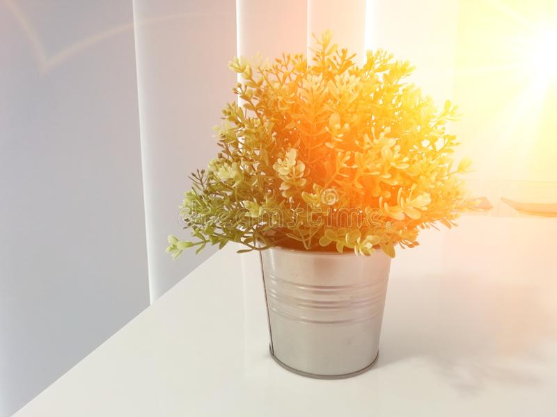 Pintando, tulipas coloridos no vaso de flores Isolado no fundo branco fotos de stock royalty free