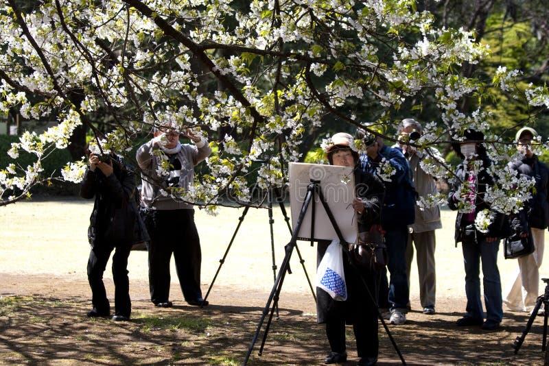 Pintando y fotografiando los flores de cereza imágenes de archivo libres de regalías