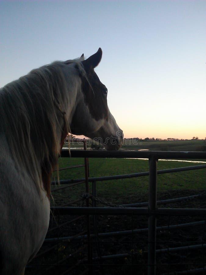 Pinte o cavalo fotos de stock royalty free
